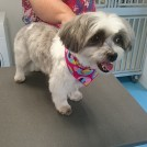 boomer mixed breed grooming salon pet styling eindhoven