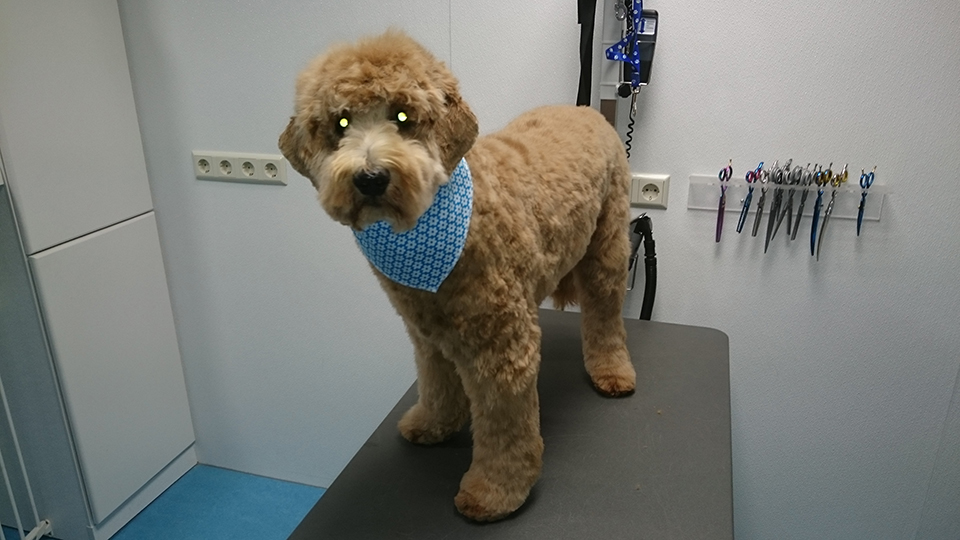 veterinarian approved advice on how to groom a dog wikihow